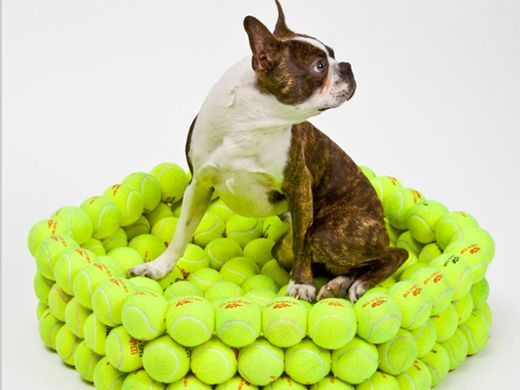 Dog bed made of tennis balls holly would have too much - Bed made of balls ...