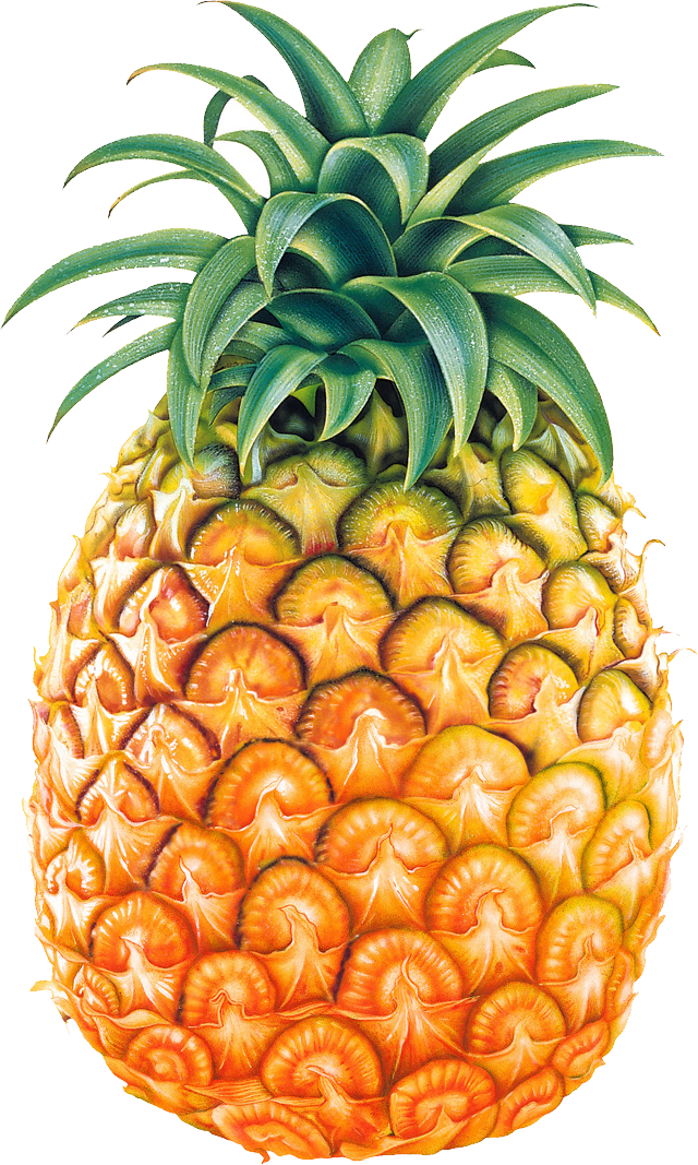 Pineapple clipart black and white free clipart 2 ...