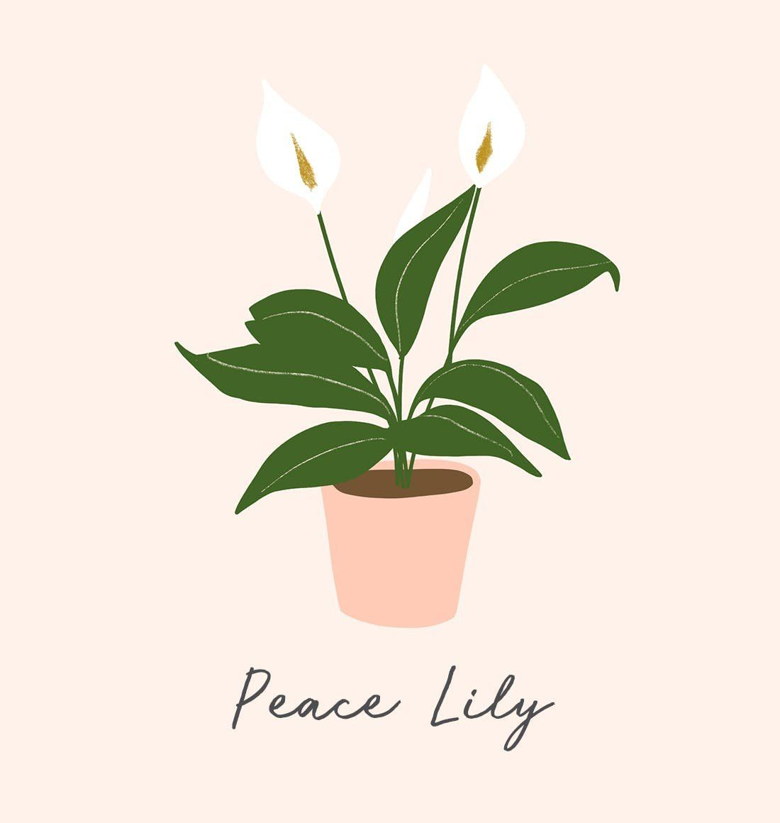 14 houseplants that are dangerous for your pets and kiddos peace lilies may be beautiful but they are poisonous to pets humans izmirmasajfo