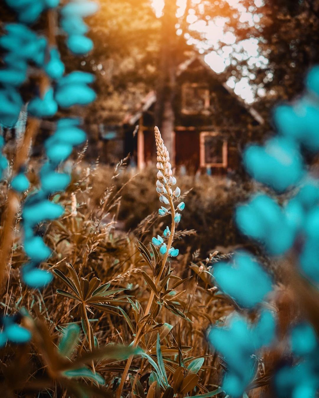 3 591 Likes 153 Comments Starrush On Instagram Alone House In The Background Wallpaper For Photoshop Light Background Images Blur Background Photography
