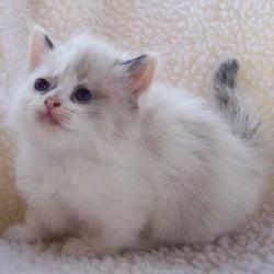 Kittenwar! - Fuzzers