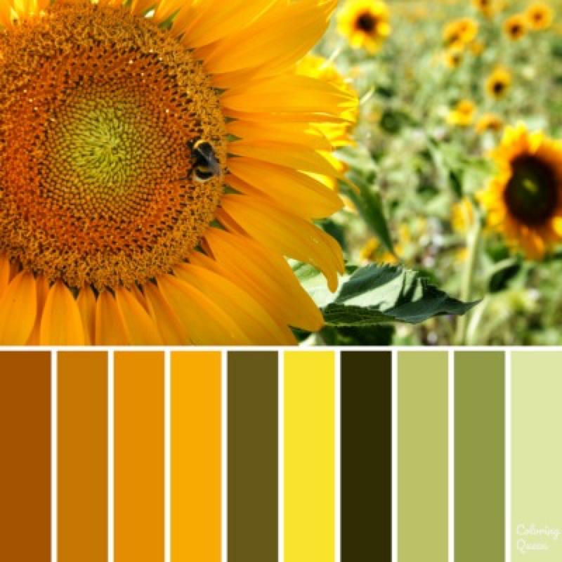 Color Schemes Coloring Queen Sunflower Colors Color Schemes Sunflower Room