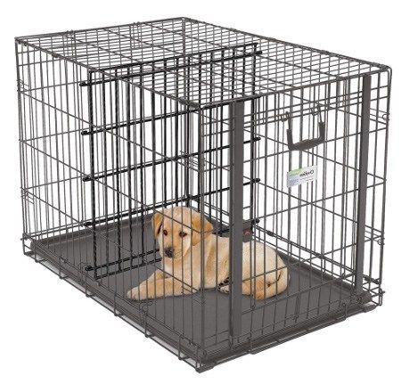 Housebreaking Your Bernese Mountain Dog Puppy Dog Crate Diy Dog