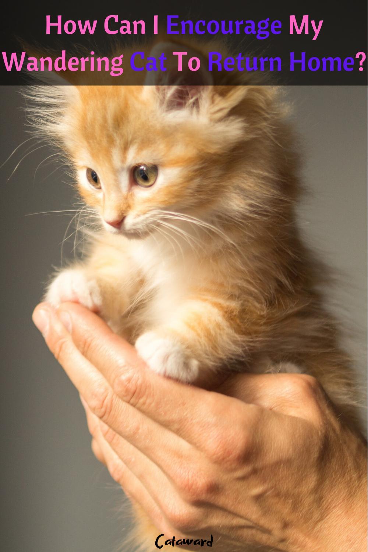 Lost Kitten Kitten Care Kitty Cats In 2020 Kittens Cutest Cute Cats Cute Animals