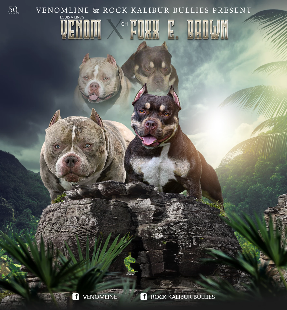Upcoming Breedings American Bully Kennels American Bully