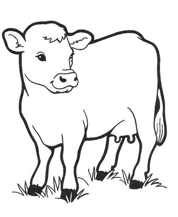 Cow Coloring Printable Page In 2020 Farm Coloring Pages Cow Coloring Pages Coloring Pictures Of Animals