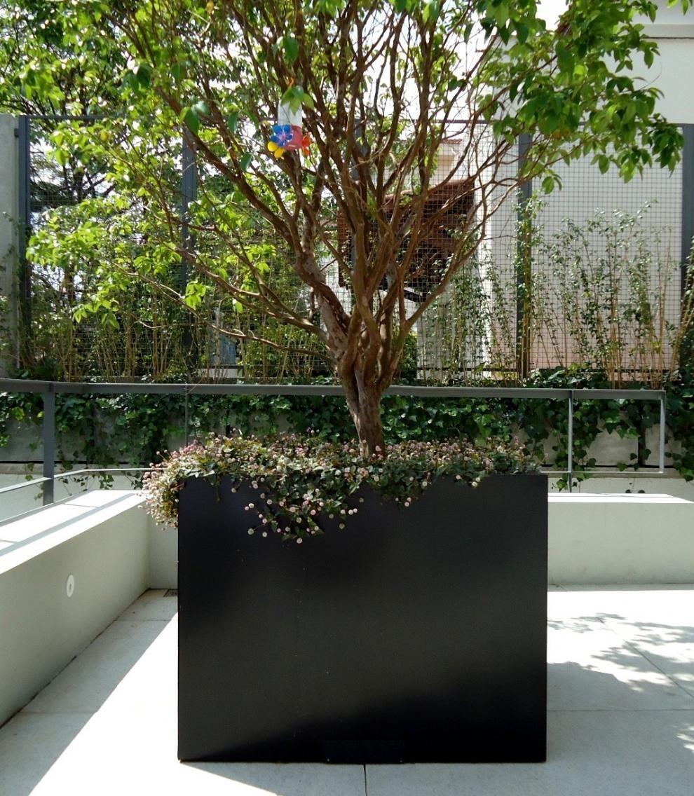 Amado jabuticabeira em vaso - Pesquisa Google | Plantas | Pinterest  DN65