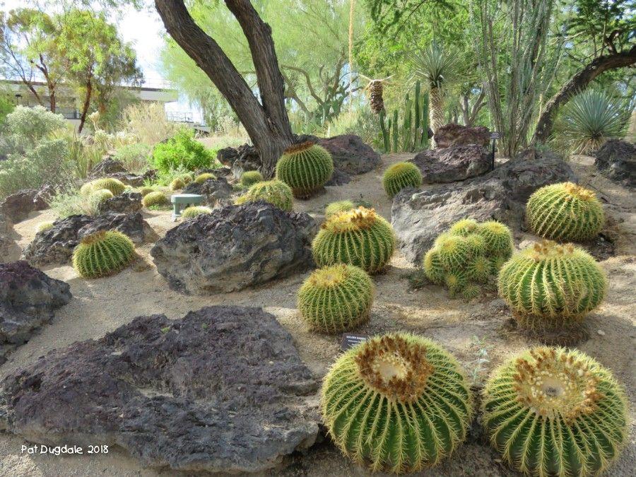 5a470a92e9186bff91fc562dc9fe8837 - Botanical Cactus Gardens Las Vegas Nv