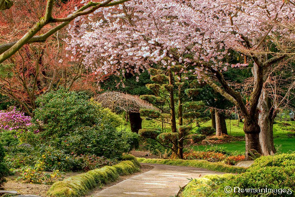 The Japanese Garden in Spring