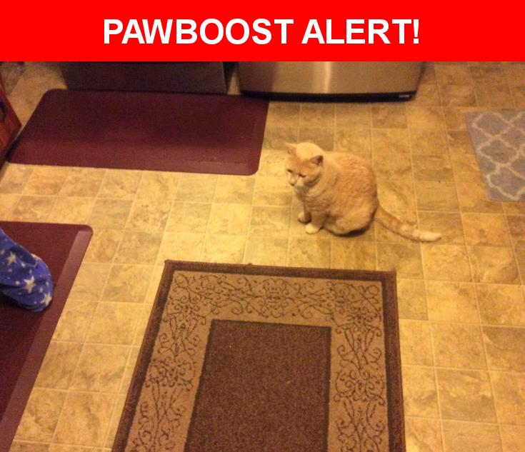 Please spread the word! Blonde was last seen in Enfield, CT 06082.    Nearest Address: Near Carmella Ter & Ganny Ter