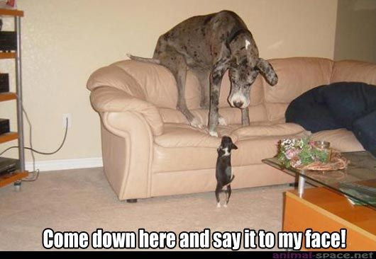What A Courage Hahahahaha Funny Animal Memes Big Dogs Funny Animals