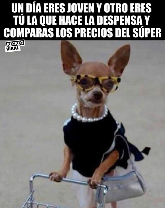 Los Planes Del Fin De Semana Imagenes Divertidas De Animales Memes De Perros Chistosos Mascotas Memes