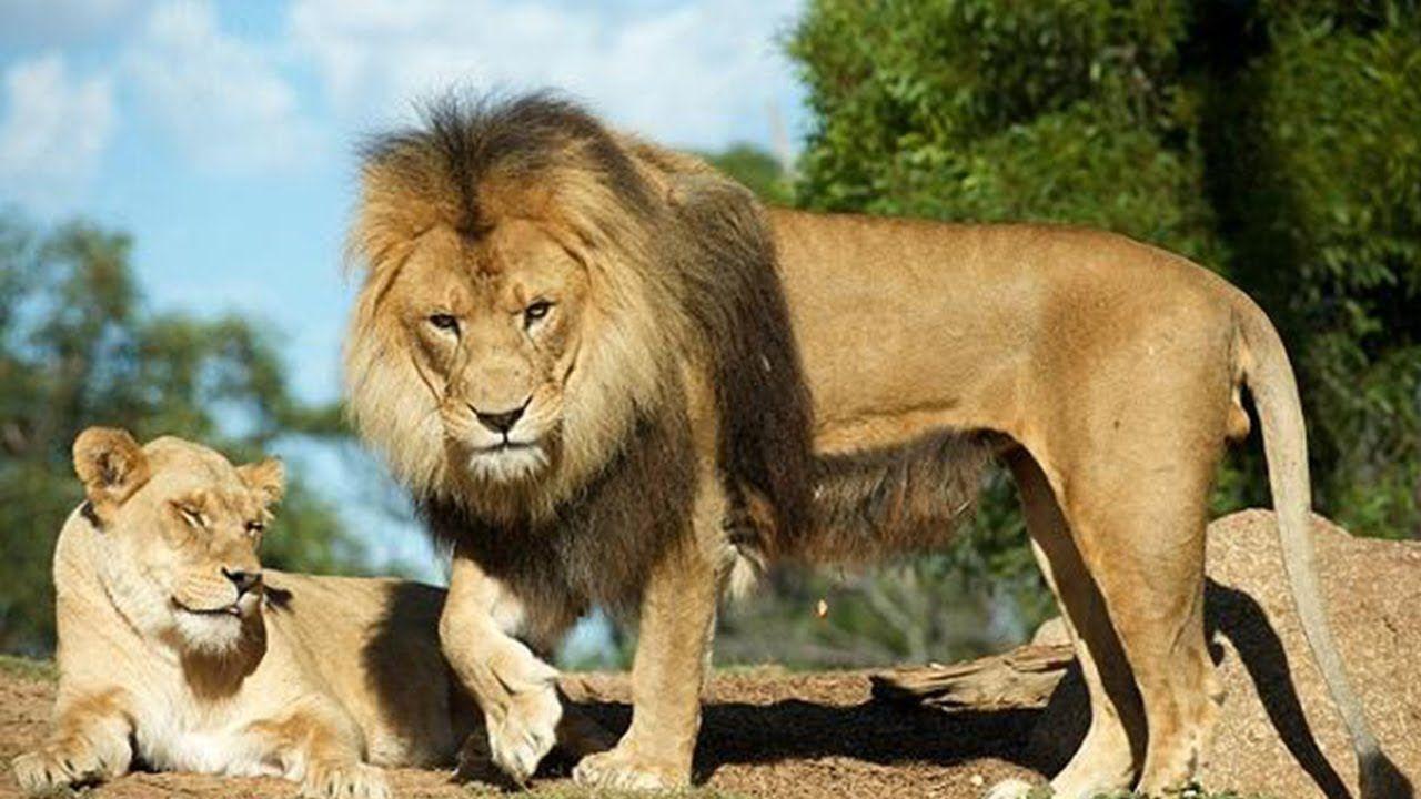 Top 10 Most Dangerous Animals in The World Dangerous
