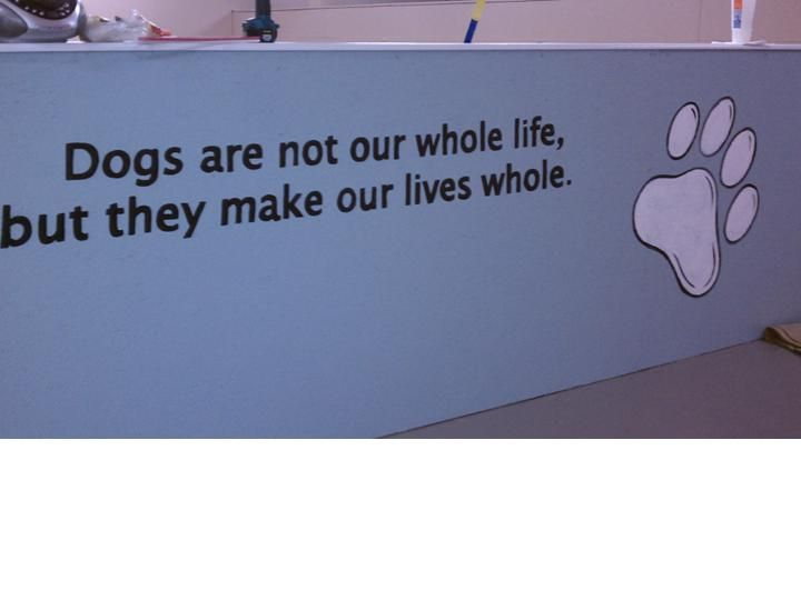Dog E Woggy Daycare In Rochester Ny Doggy Daycare Dog