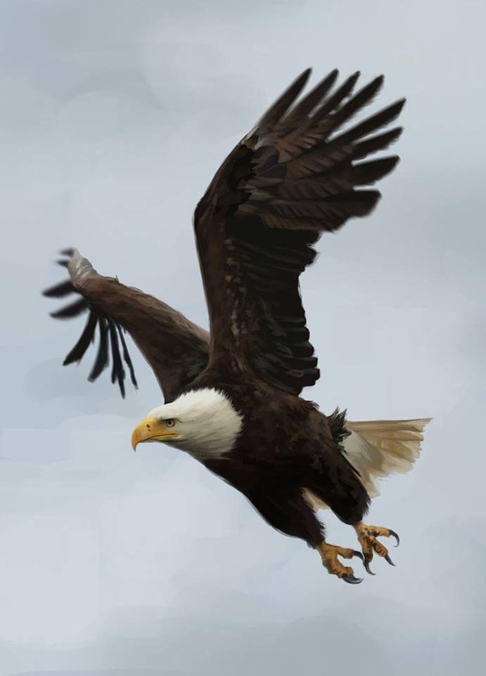 Flying eagle birds large pinterest eagle bird and bald eagles flying eagle altavistaventures Gallery
