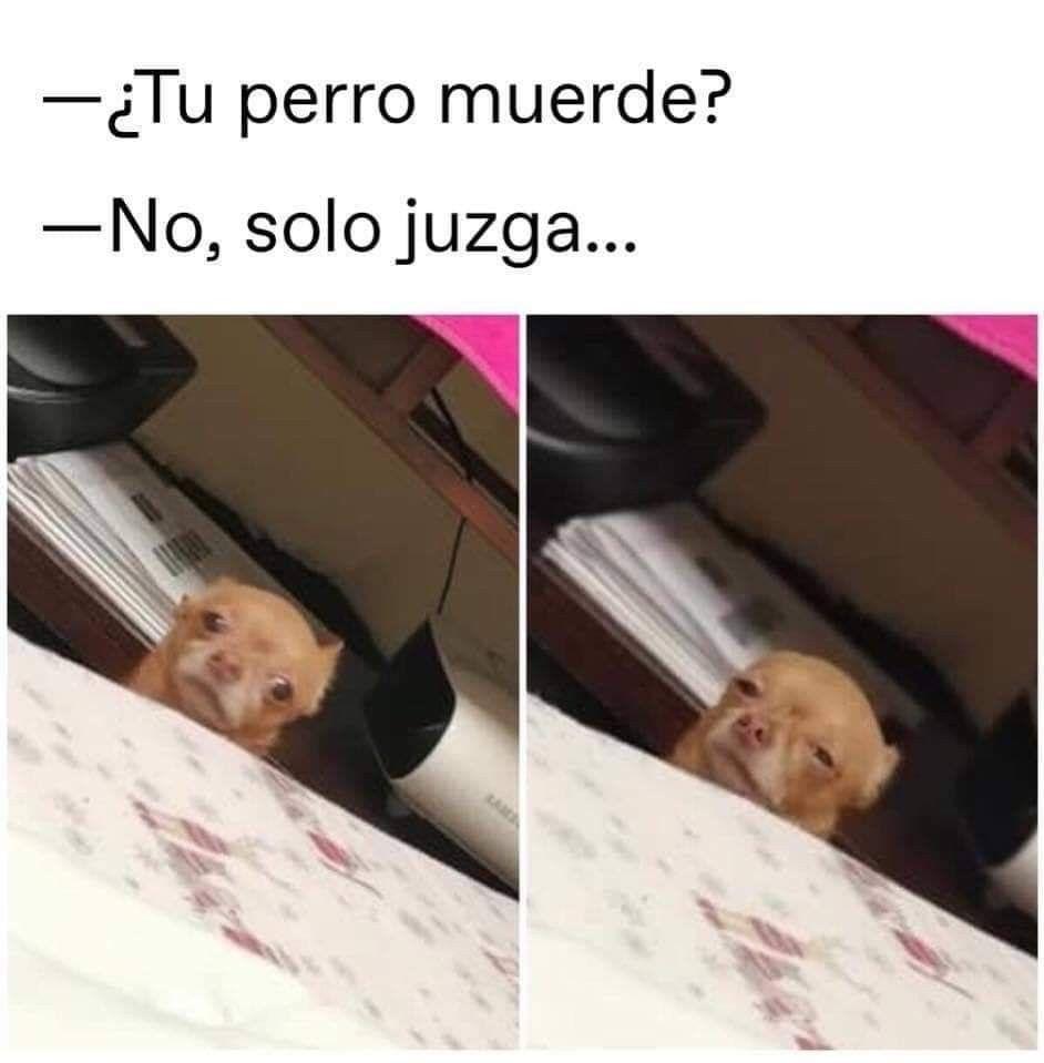 Pin De Maria Alejandra En Chistes Memes Divertidos Meme Gracioso Meme Divertido