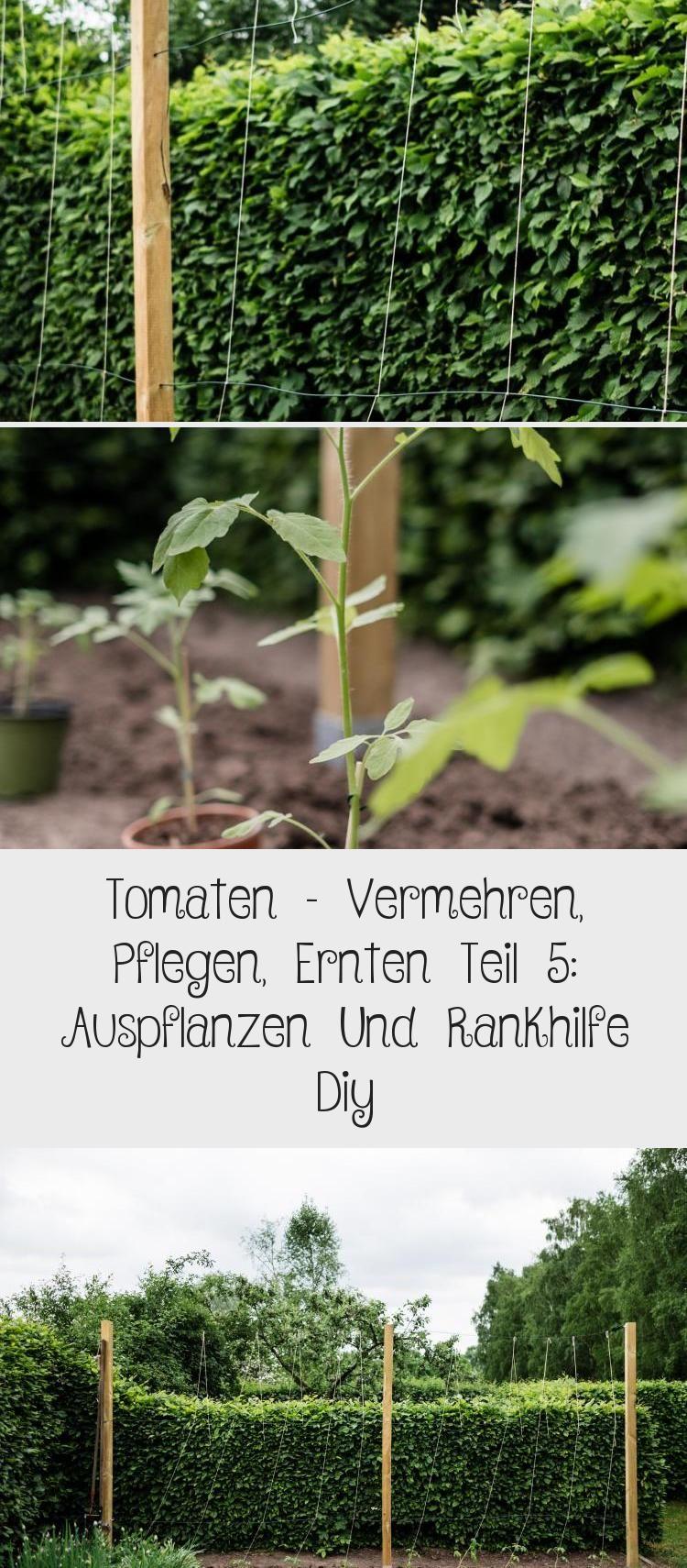 Die Wichtigsten Tipps Und Tricks Beim Auspflanzen Der Tomatenpflanzen Die Passende Tomaten Rankhilfe Selber Bauen Tomaten Teil5 Toma In 2020 Garten Plants Giessen