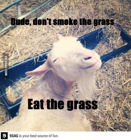 Wise goat