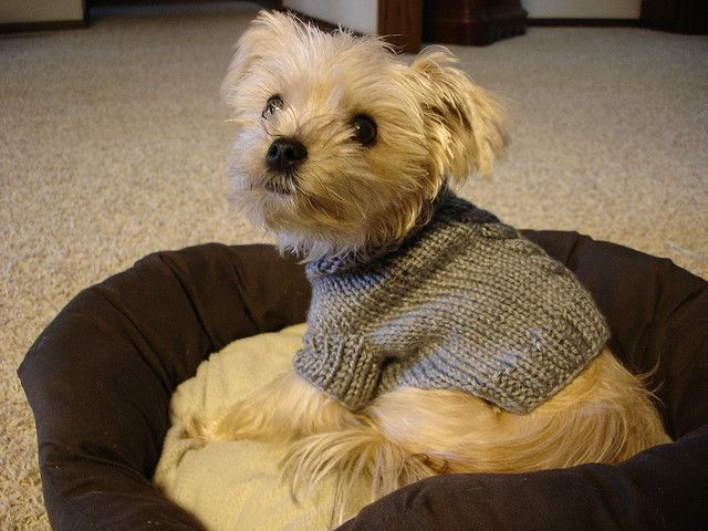 cabled dog sweater pattern @Gerda Porter | fotos amo a los chiquis ...
