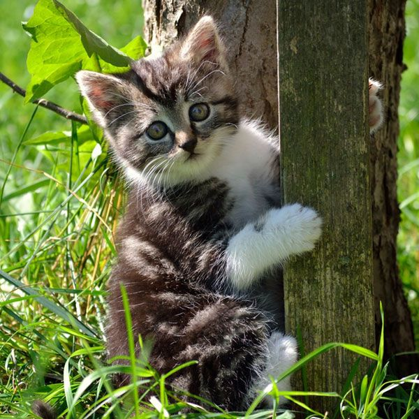 How Long Do Cats Live Cats Cat Lifespan Baby Cats