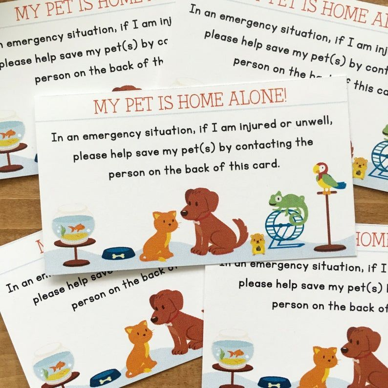 Pet Emergency Card In Case Of Emergency Set Of 5 Contact Etsy With Images Pet Emergency Card Pet Emergency In Case Of Emergency