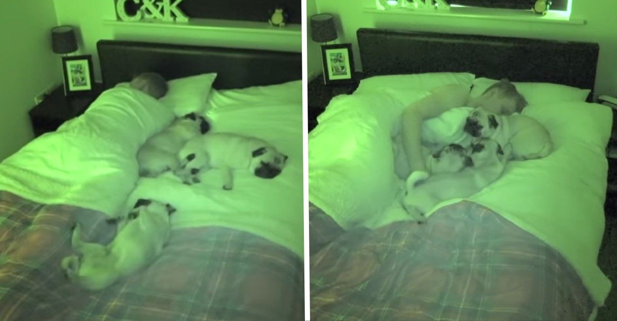 She Checks The Security Cameras And Sees Her Partner With Their Dogs In Bed We All Like To Sleep Like That In 2020 Security Cameras For Home Security Camera System Technology Support