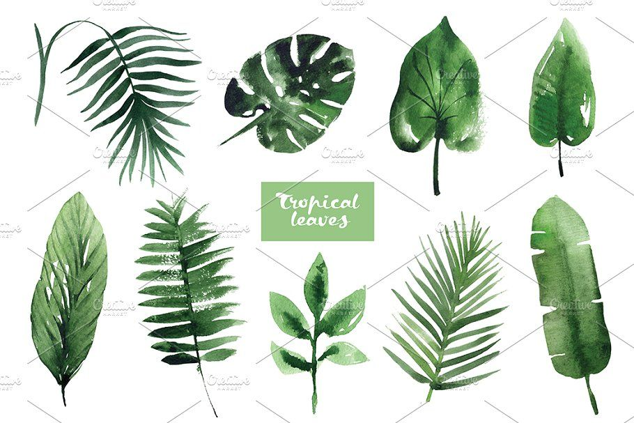 Watercolor Tropical Leaves Tropical Leaves Illustration Tropical Leaves Tropical Foliage The following assets contain unreleased and/or restricted content. watercolor tropical leaves tropical