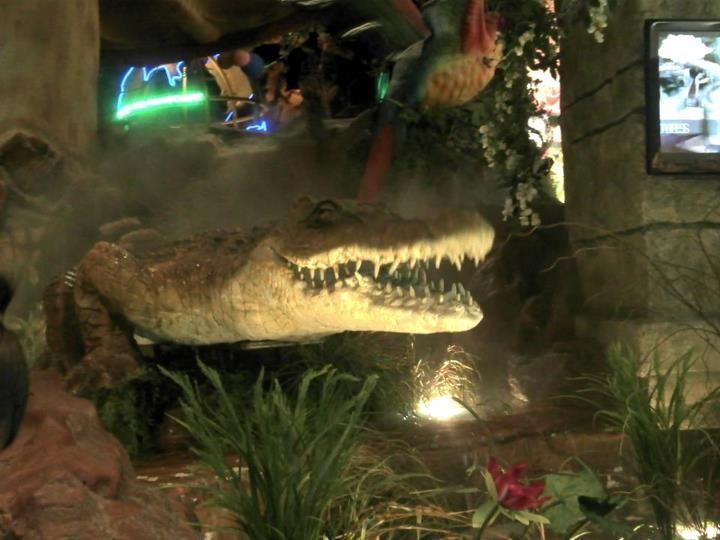 alligator trostpreis