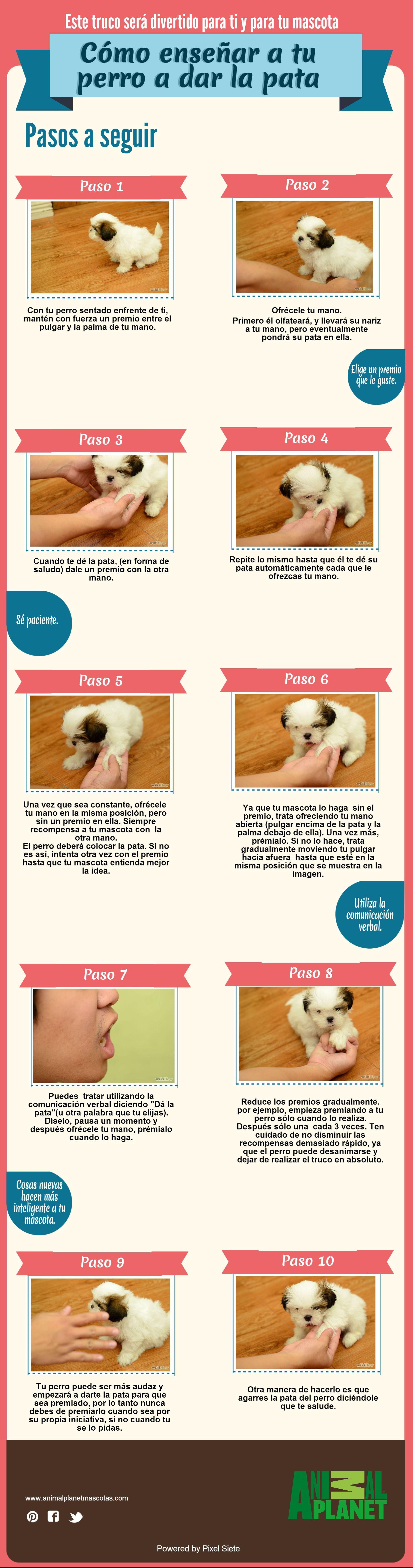 710 Ideas De Peludos Mascotas Perros Animales Y Mascotas