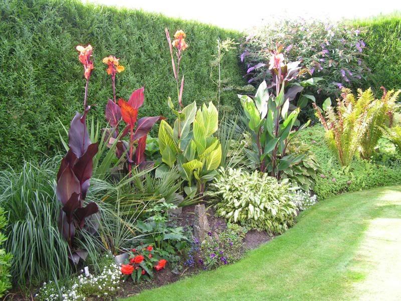 Garden Borders With Cannas Canna Blacky Canna Pretoria Canna Durban Canna City Of Portland Tropical Garden Design Planting Flowers Backyard Landscaping
