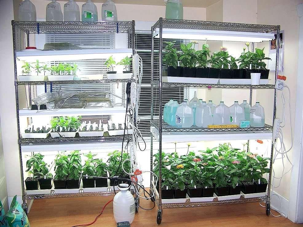 What Is A Grow Light For Indoor Plants Indoor Grow Lights Indoor Vegetable Gardening Indoor Plant Lights