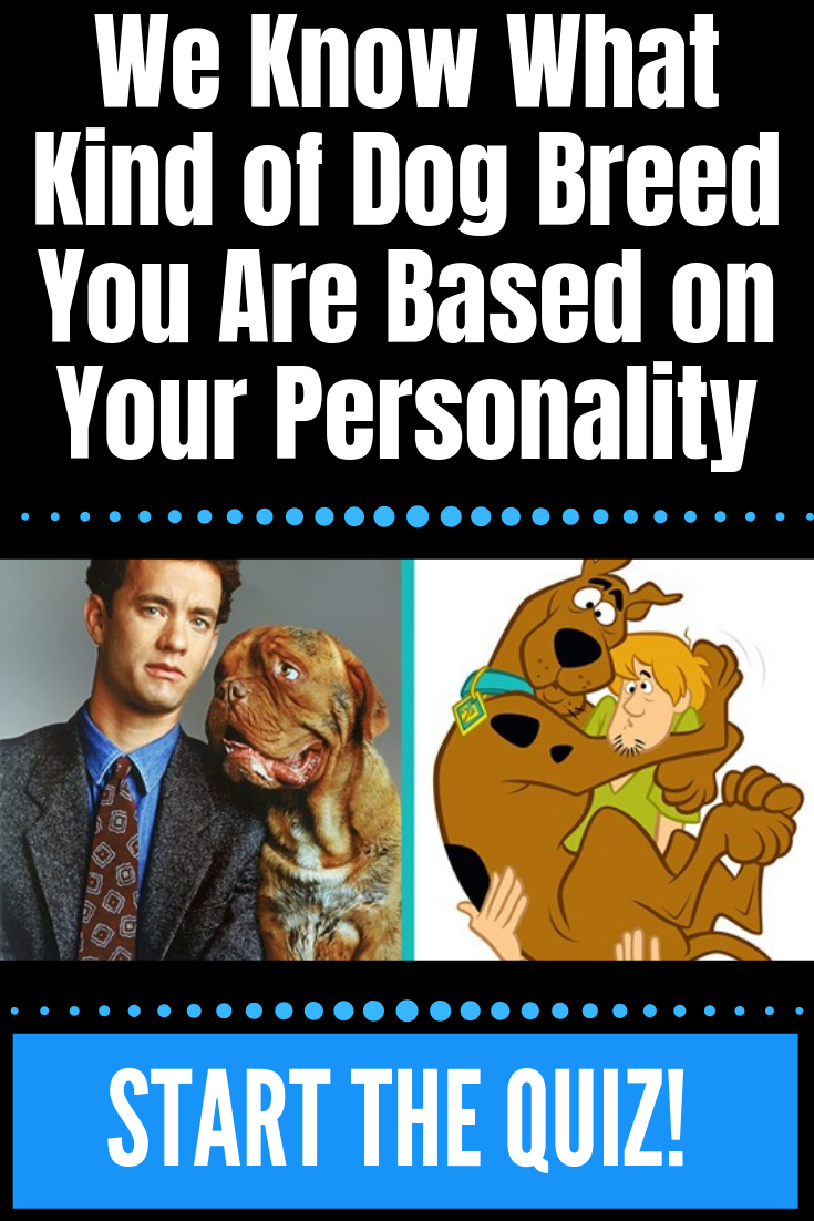 We Know What Kind Of Dog Breed You Are Based On Your Personality What Kind Of Dog Dog Breeds Dog Quiz