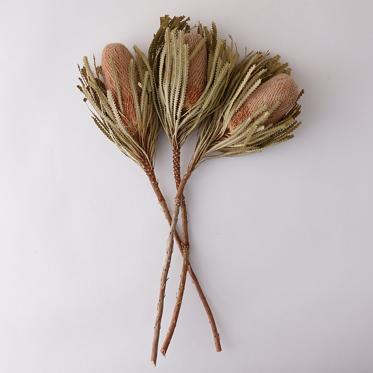 Dried Banksia Bunch Faux Flowers Flower Branch Seed Pods