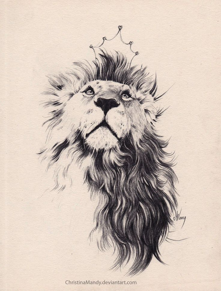 Image Result For Lion Tattoo Tattoo Art Pinterest Lion Tattoo