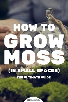 Moss Heaven! How To Grow It And Where To Buy It  Everything You Need To Know Is Right Here! – Growing moss