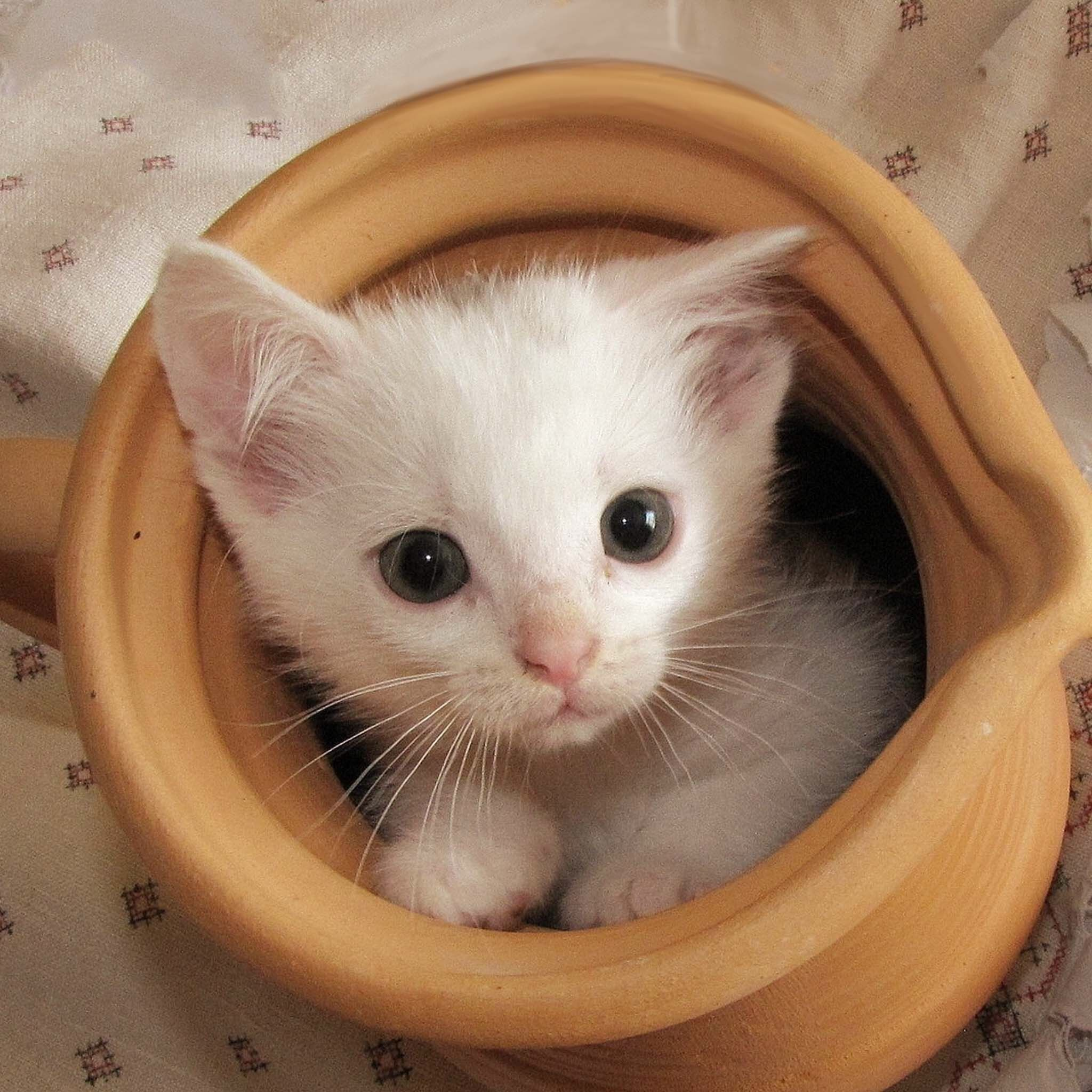 Explore Cat Wallpaper Baby Cats And More