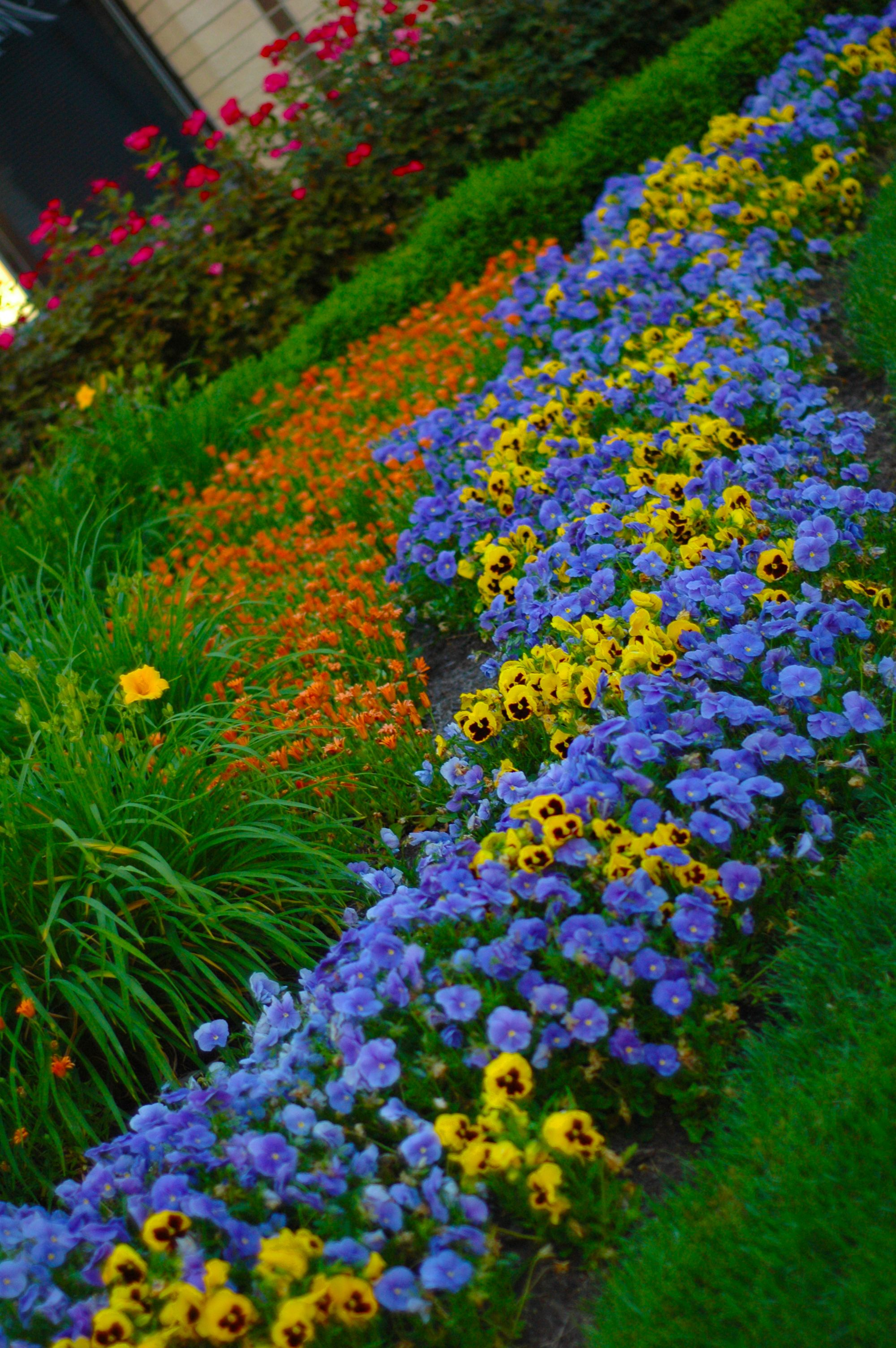 Use Of Seasonal Color Container Gardens Perennials Projects