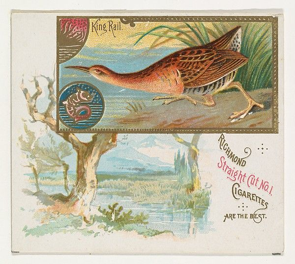 King Rail, from the Game Birds series (N40) for Allen & Ginter Cigarettes