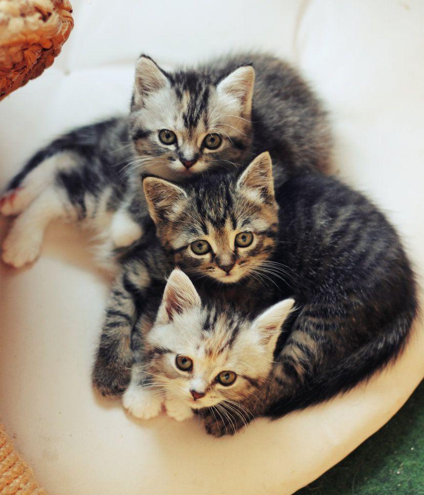 Six cat eyes ♡