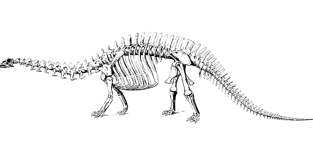 Free Image On Pixabay Dinosaur Fossil Paleontology Dinosaur