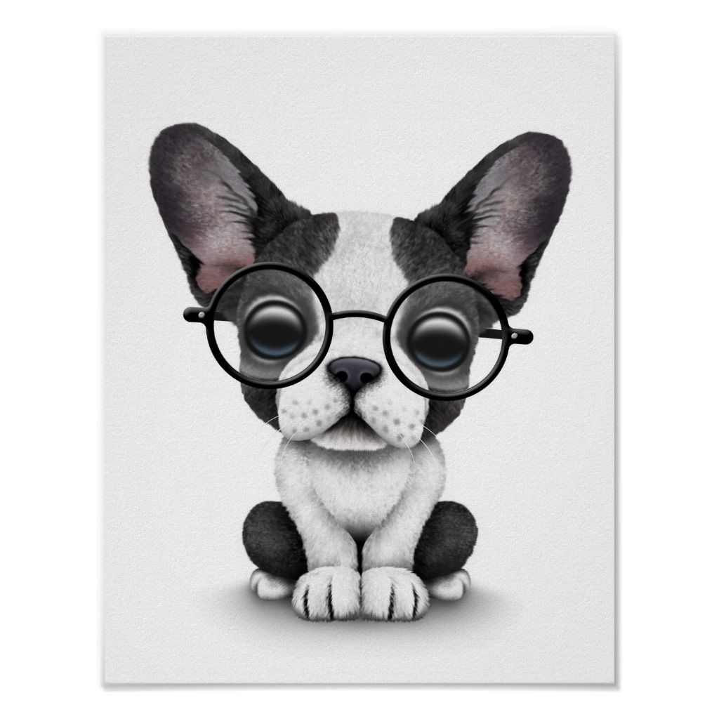 Cute French Bulldog Puppy With Glasses White Poster Bulldog