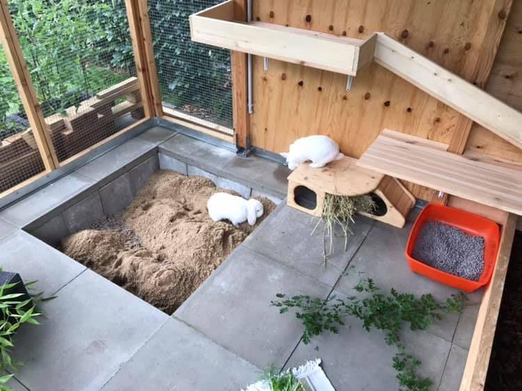 Buddelkisten für Kaninchen Haltung, Pflege, Verhalten