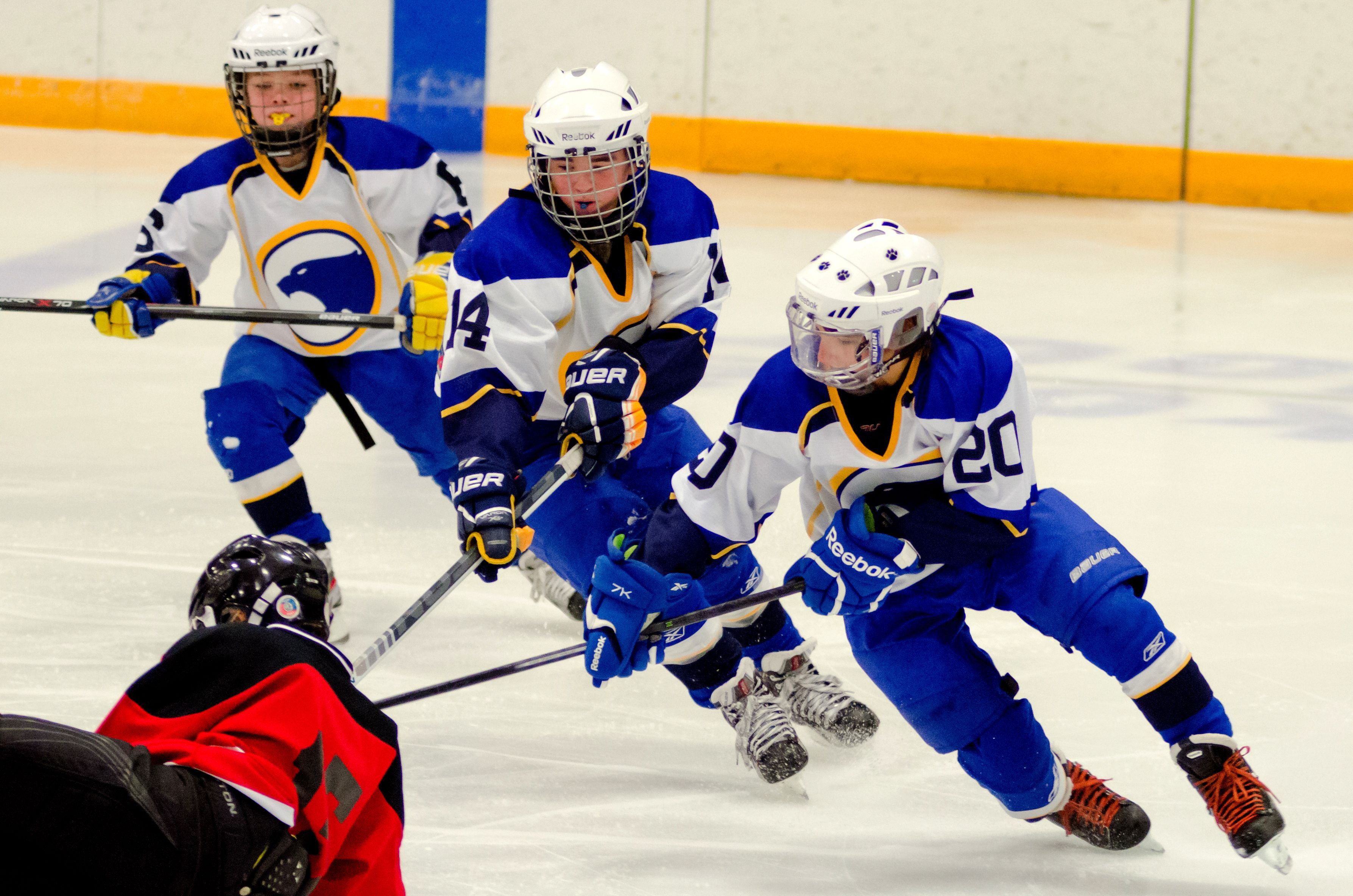 Group Effort Photo Taken By Mark Bower Photo Was Taken On 11 24 13 In Aberdeen Photo Is Of Youth Hockey For Aberdeen Cougars And H Youth Hockey Hockey Youth