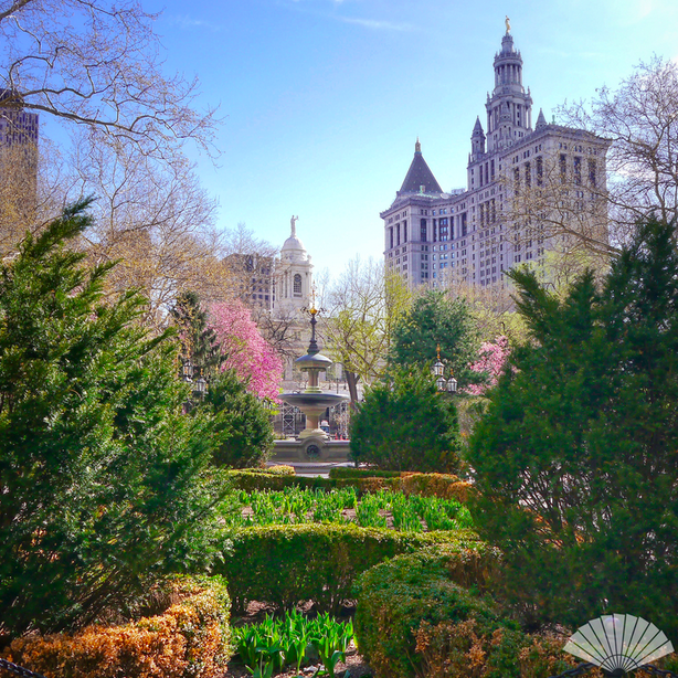 City Hall Garden, Lower Manhattan, New York. May 2015 #MyViewYork #MyViewYork Photo @CXCArtist #NYC #Manhattan #MOview