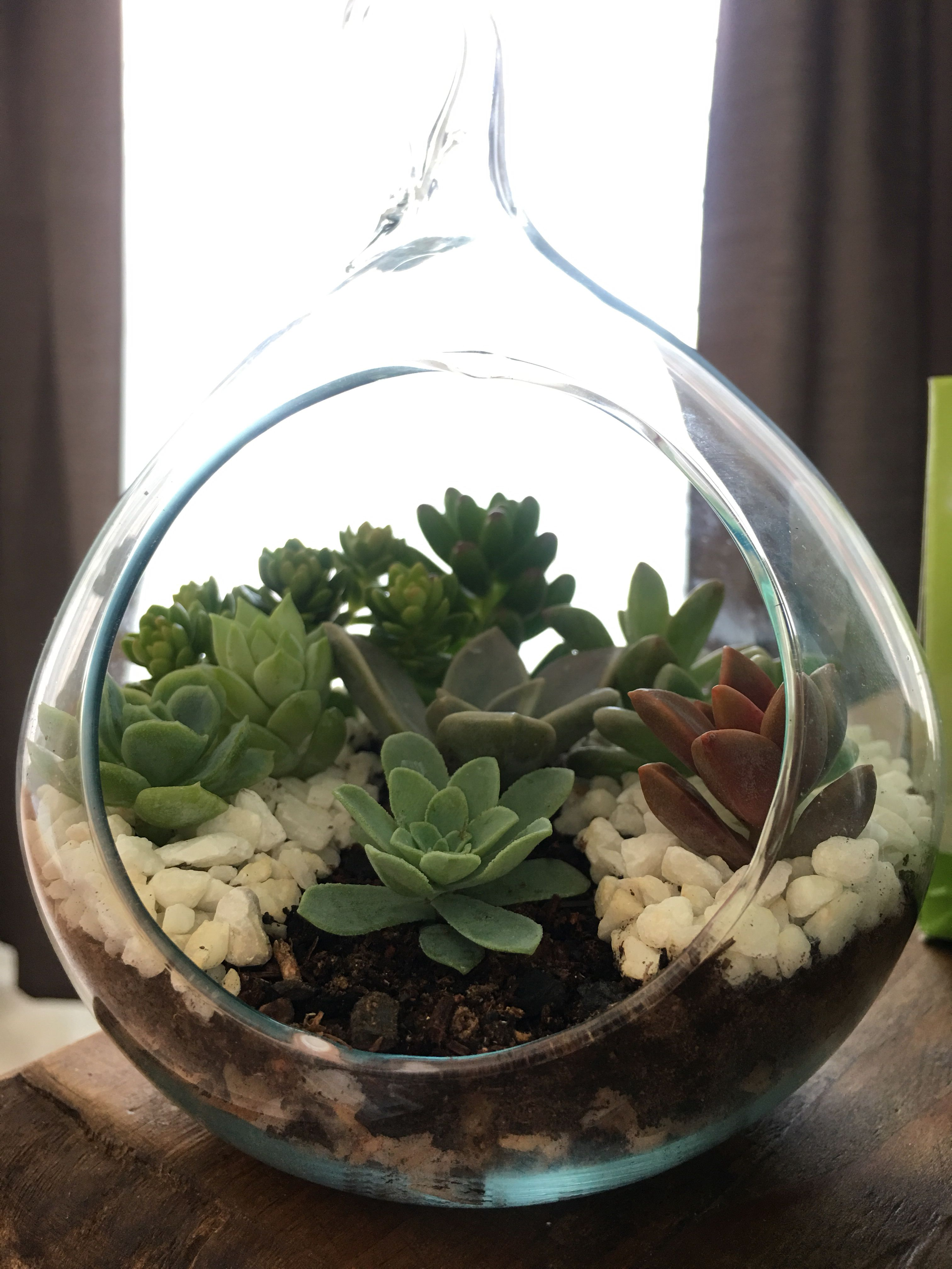 Pin by nicoletta fei on bomboniere pinterest terrarium plants