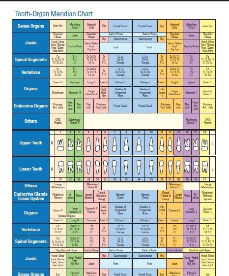 Free to download tooth organ meridian chart enjoy homeopathynotes blogspot books kits  other resources also added this morning rh pinterest