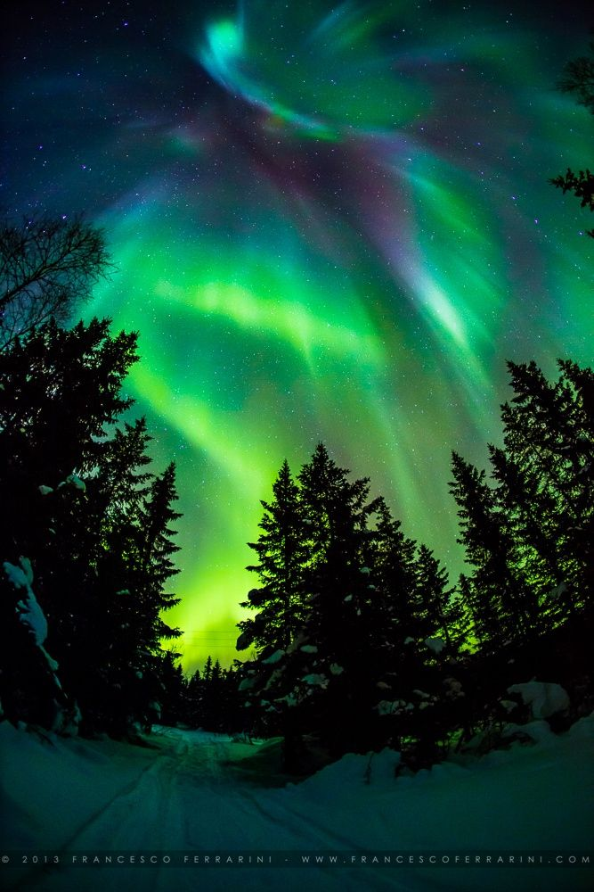 An Incredible Northern Lights Visible Up To Zenith Its Green Light Was Reflected On The Snow Cove Aurora Borealis Northern Lights Northern Lights Night Forest