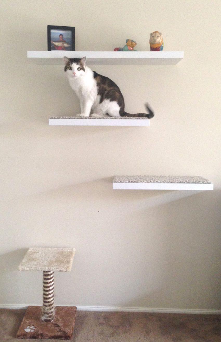 DIY Floating Cat Shelves | DIY & Inspiration · · Woodwork ... on floating wall shelf ideas, floating shelf plans, floating glass corner shelf,