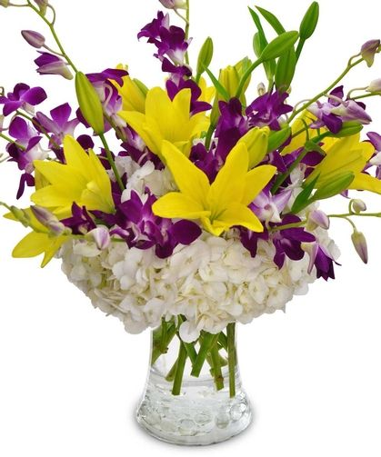 A Golden Crown Orchids Http Www Centralsquareflorist Com Orchids A Golden Crown Orchid Arrangement Cambridge Ma