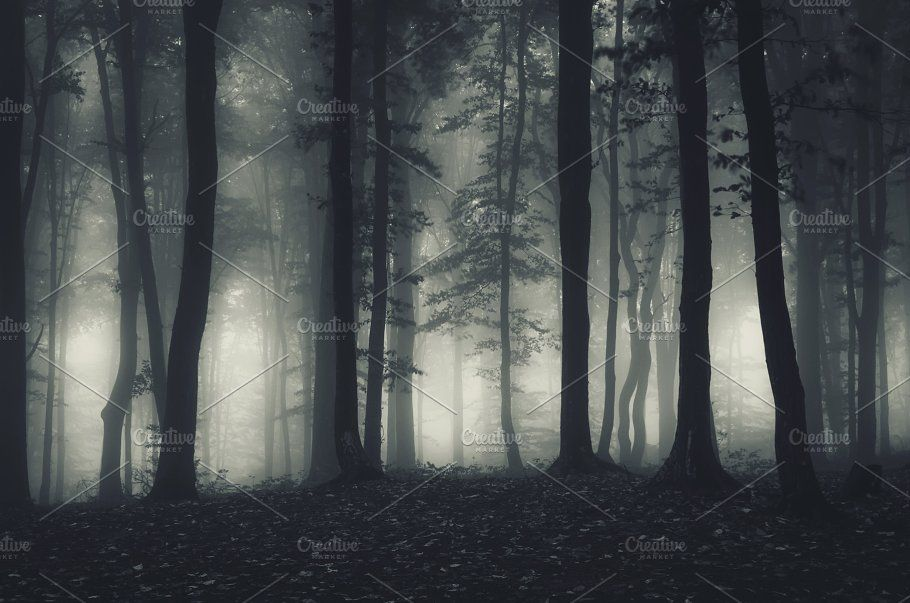 Dark Haunted Forest At Night Haunted Forest Night Forest Forest Drawing
